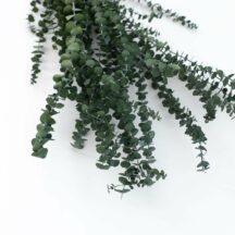 Eukalyptus Babyblue Trockenblumen
