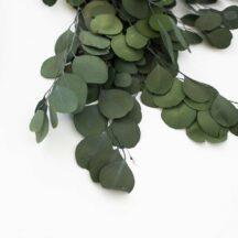 Eukalyptus Populus gruen getrocknet Trockenblumen online