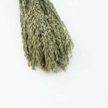 Hafer getrocknet Graeser Trockenblumen online