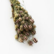Nigella getrocknet Jungfer im Gruenen Trockenblumen online