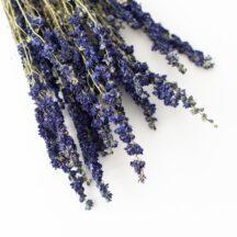 Delphinium blau getrocknet