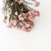Diosmi rosa getrocknet