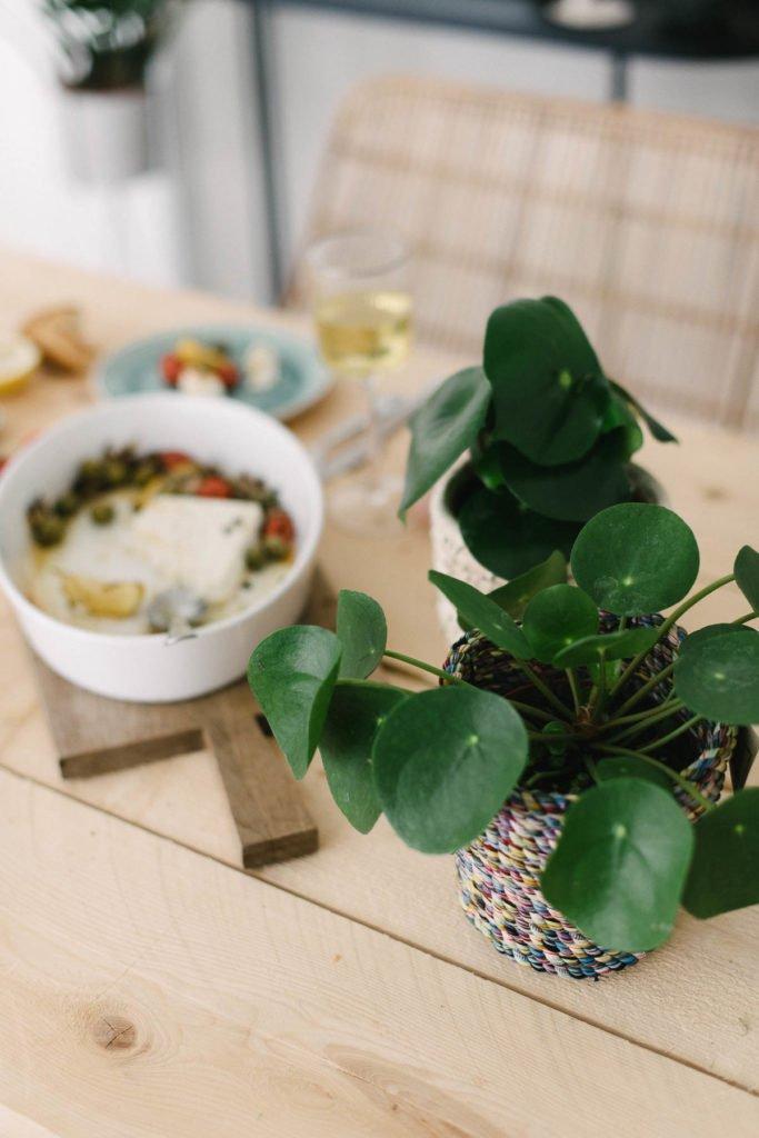 Pilea Zimmerpflanze