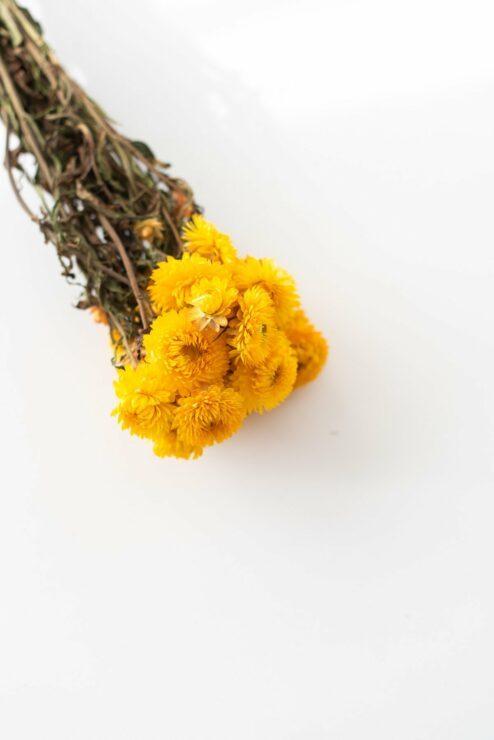 Helichrysum gelb getrocknet Strohblume