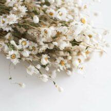 Bund getrockneter, weißer, kleiner Munni Blüten