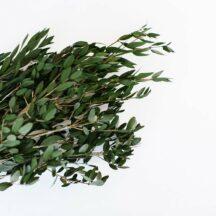 Wilde Olivenzweige stabilisiert