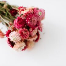 Helichrysum rosa getrocknet Trockenblumen