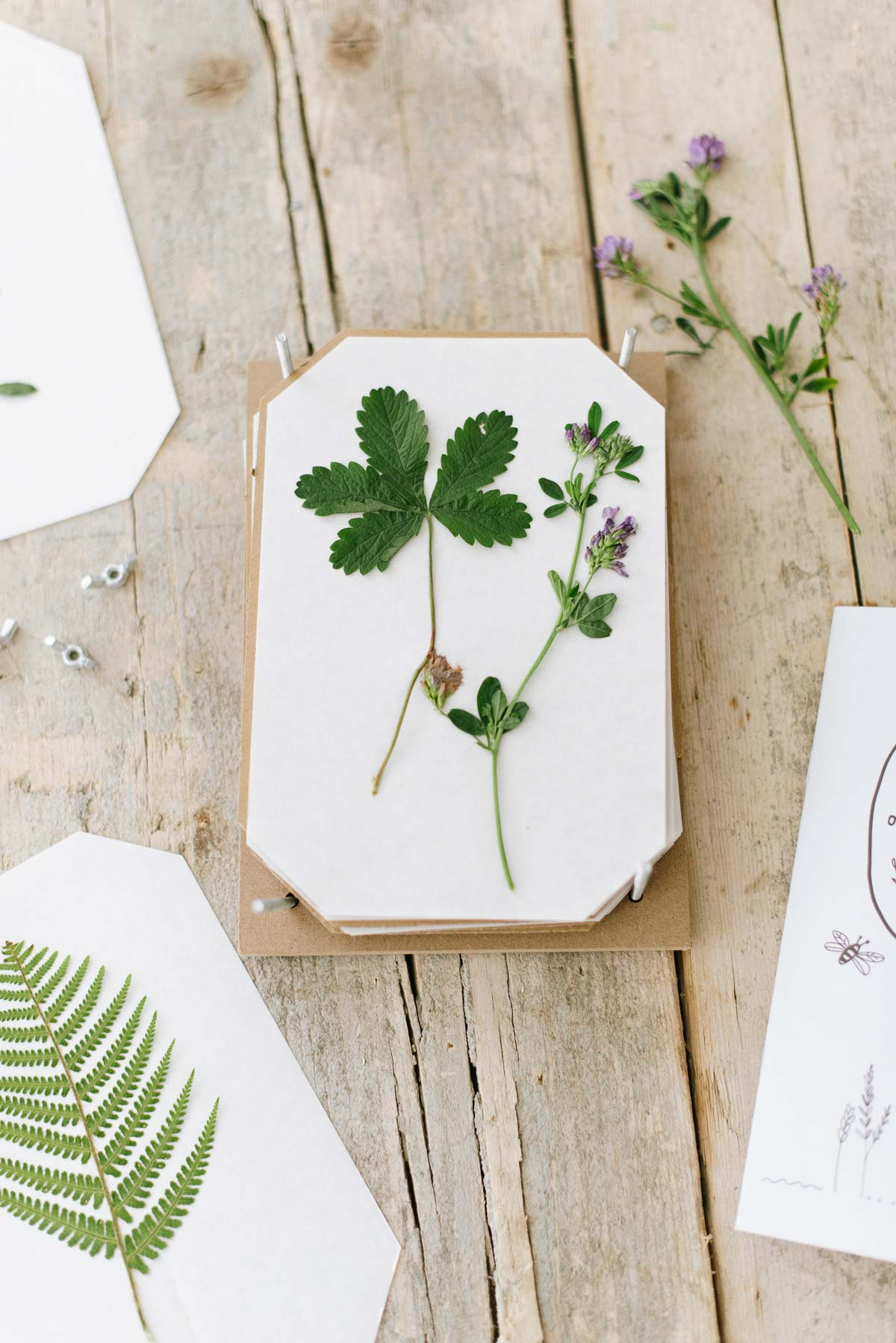 Klee, Erdbeerblätter und Wiesenblumen in der Blumenpresse.