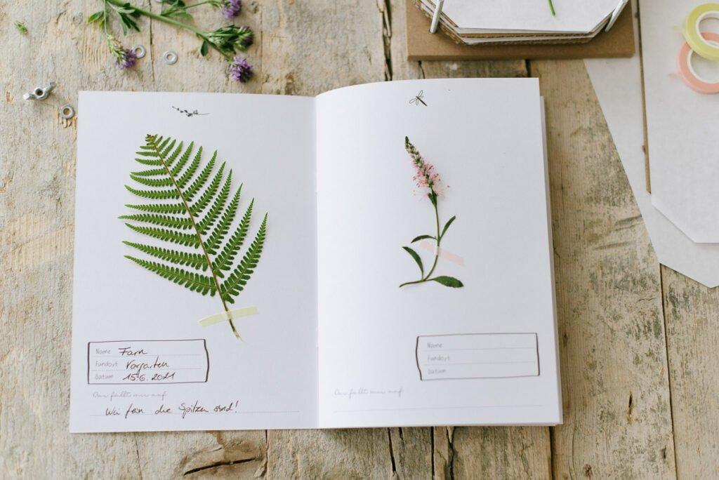 Herbarium für Kinder