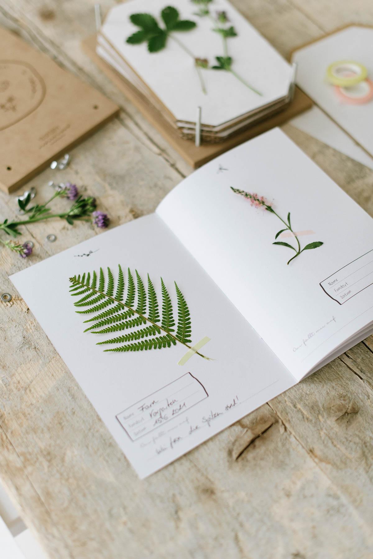 Gepresste Blumen und Pflanzen werden im Herbarium aufbewahrt und beschriftet
