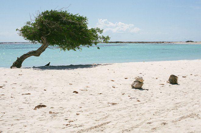 Traumstrand für die Flitterwochen: Baby Bach Aruba