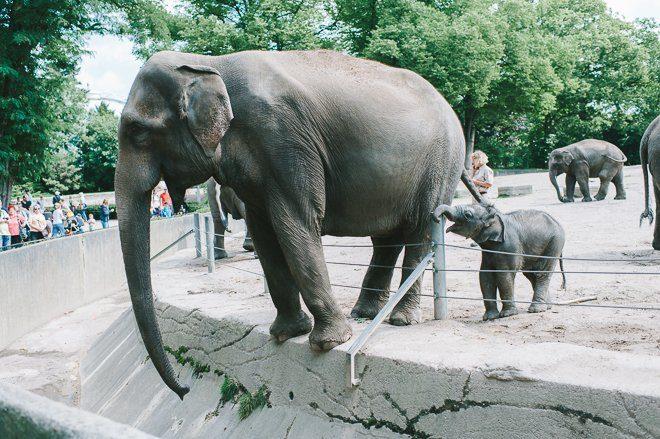 Babyelefant im Hamburger Zoo Hagenbeck-001