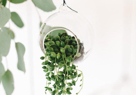 Neu im Frl. K Shop: Hanging Glas Terrarium