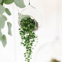 Glas Terrarien rund aufhängen-4