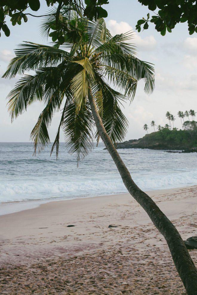 Flitterwochen auf Sri Lanka