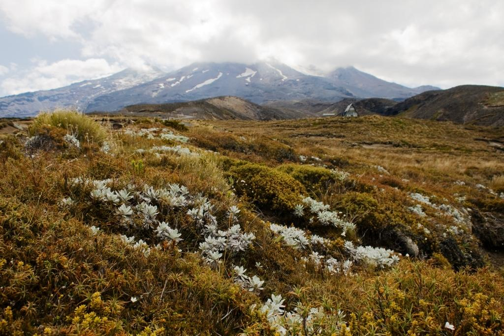 Weltwunderer_Tongariro National Park