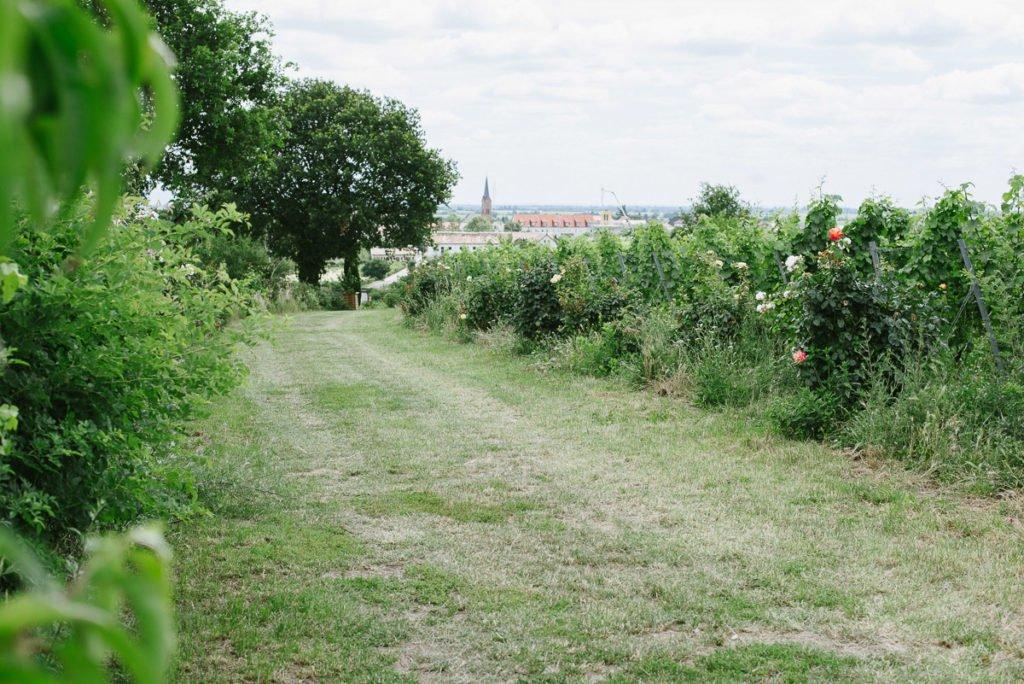 Feldweg Deidesheim Villa im Paradies