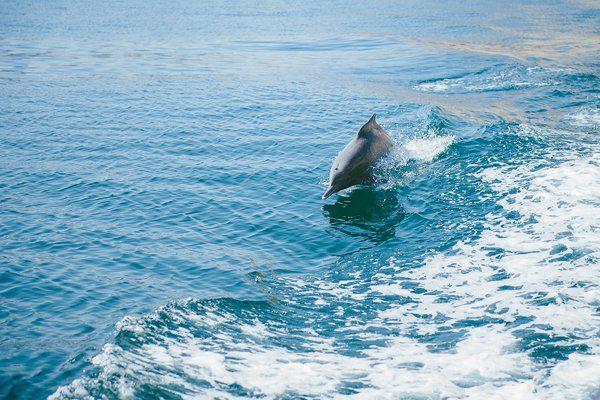 reiseziel Orient für die Flitterwochen Oman4